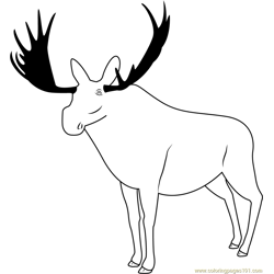 Poudre Canyon Moose Free Coloring Page for Kids