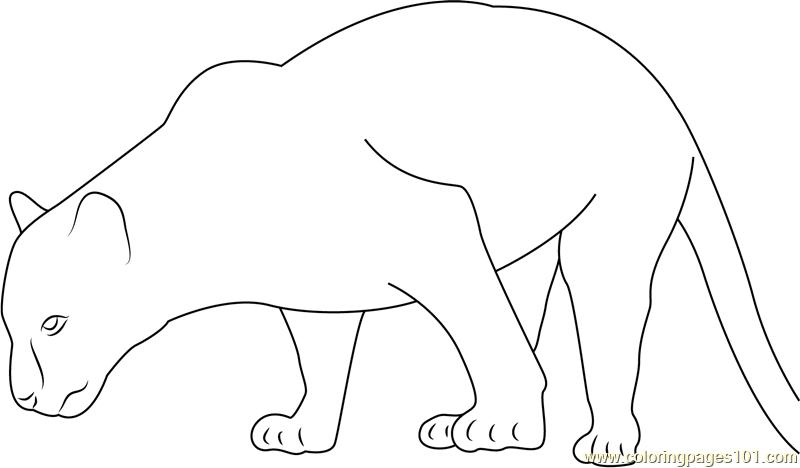 Black Panther Walking Coloring Page - Free Panther ...