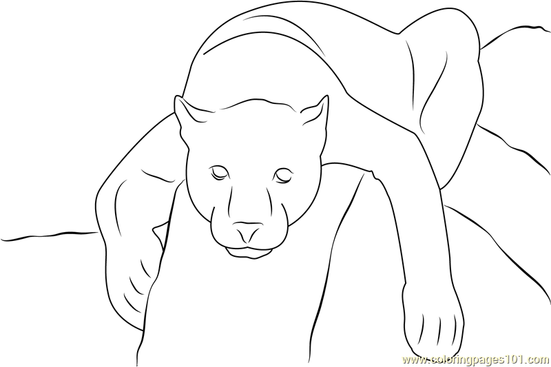 Black Panther Coloring Page Free Panther Coloring Pages
