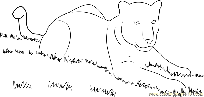 Panthaer in Grass Coloring Page