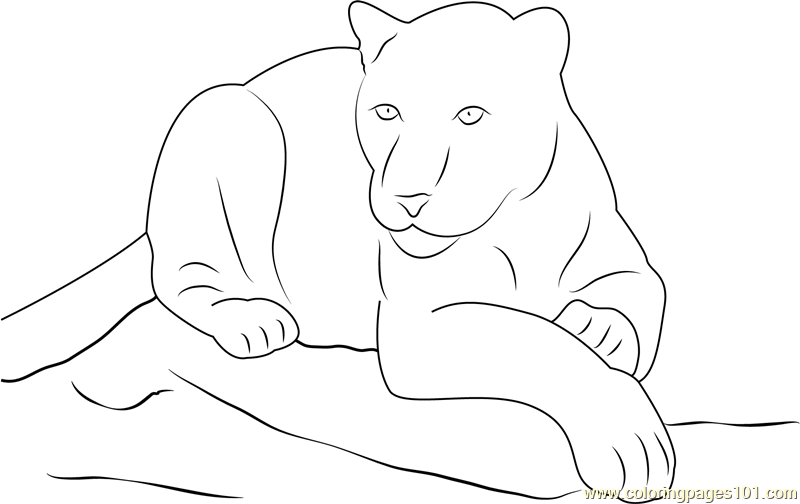 Panther Sitting on Rock Coloring Page