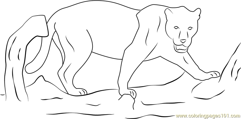 Wild Black Panther Coloring Page