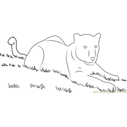 Panthaer in Grass Free Coloring Page for Kids