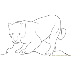 Panther Get Ready for Attack Free Coloring Page for Kids