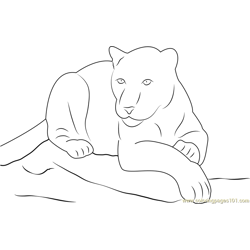 Panther Sitting on Rock Free Coloring Page for Kids
