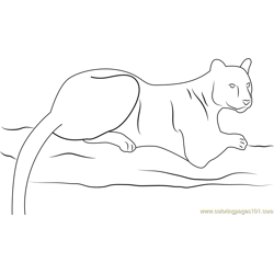 Panther at Look Free Coloring Page for Kids