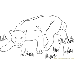 Panther Free Coloring Page for Kids