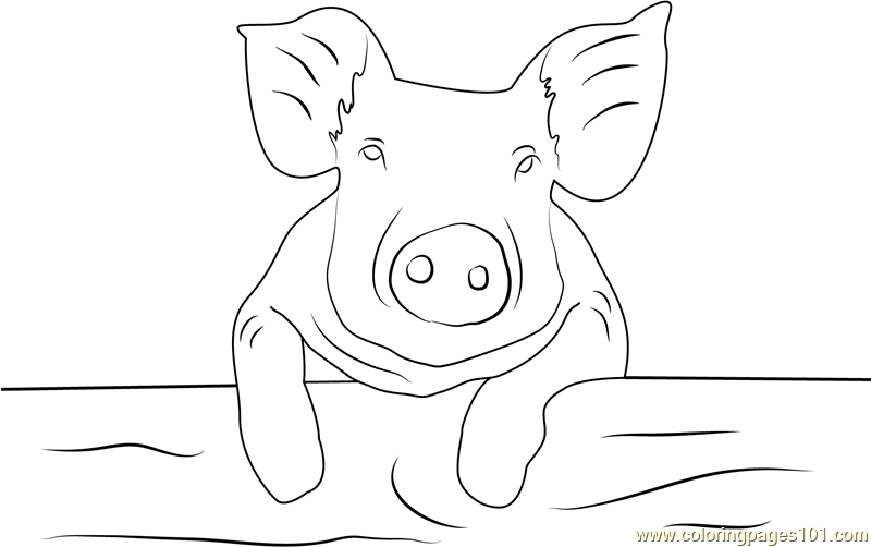 Baby Pig Coloring Page Free Pig Coloring Pages