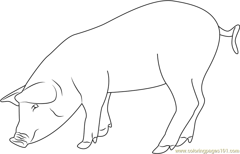 Eating Pig Coloring Page Free