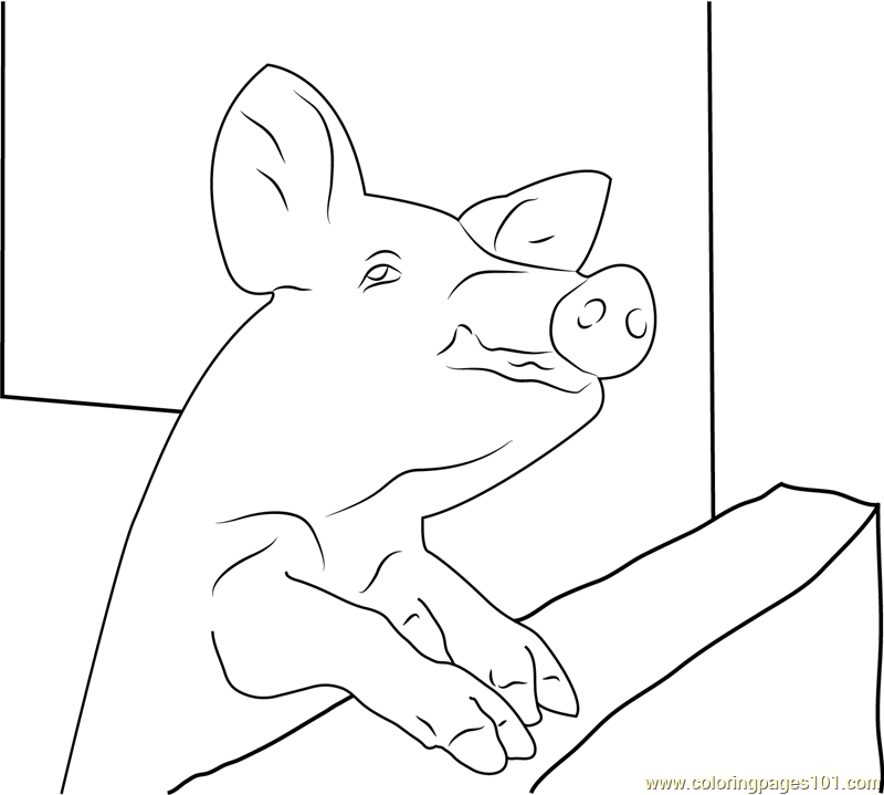 Pig Malawi Coloring Page