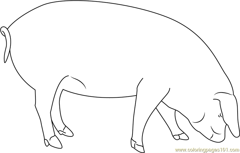 Pig Smelling Coloring Page