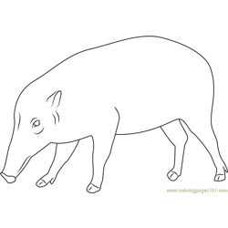 Black Pig coloring page