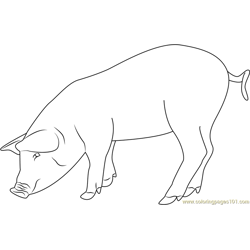 Eating Pig coloring page