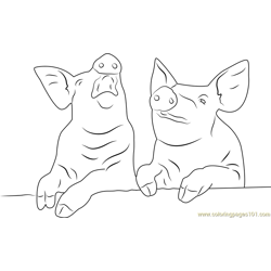 Laughing Pigs Free Coloring Page for Kids