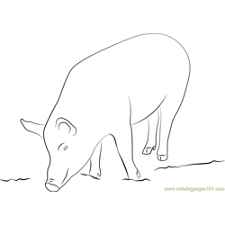 Mudchute Farm Pig Free Coloring Page for Kids
