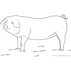 Pig Farming in India Free Coloring Page for Kids