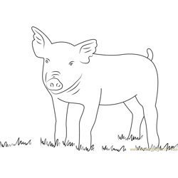 Pig Look Free Coloring Page for Kids