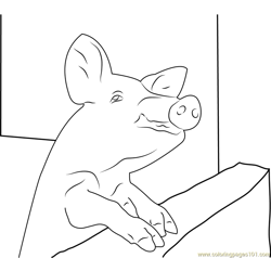 Pig Malawi Free Coloring Page for Kids