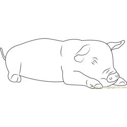 Pig Sleeping Free Coloring Page for Kids