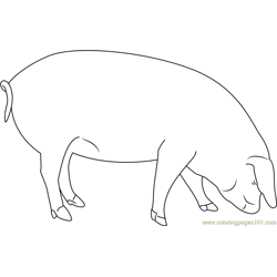 Pig Smelling Free Coloring Page for Kids