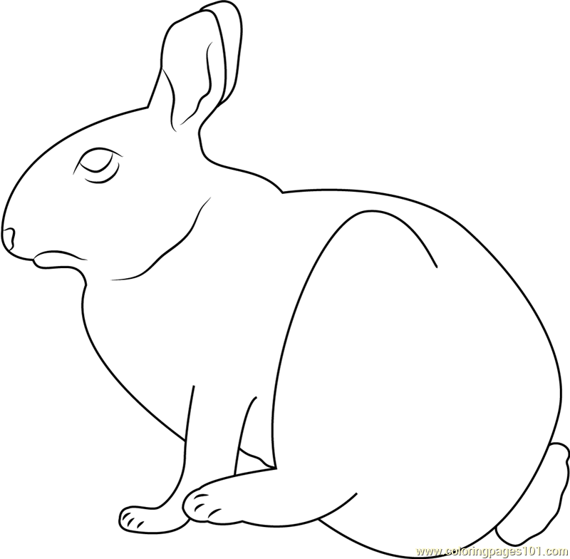 Cottontail Rabbit at Marymoor Coloring Page - Free Rabbit ...