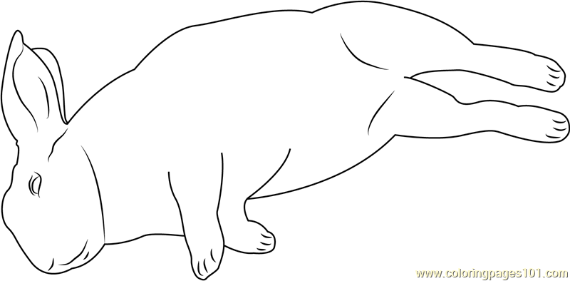 mini lop coloring pages | Mini Rex Sleeping Coloring Page - Free Rabbit Coloring ...