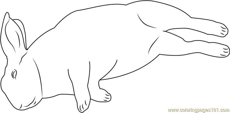 Mini Rex Sleeping Coloring Page Free Rabbit Coloring
