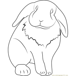 Lop Eared Pet Rabbit