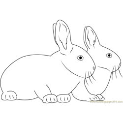 Two Rabbits Together