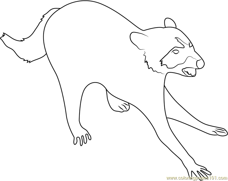 Attacking Raccoon Coloring Page