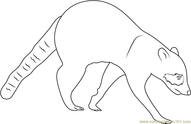 Northern Raccoon Coloring Page