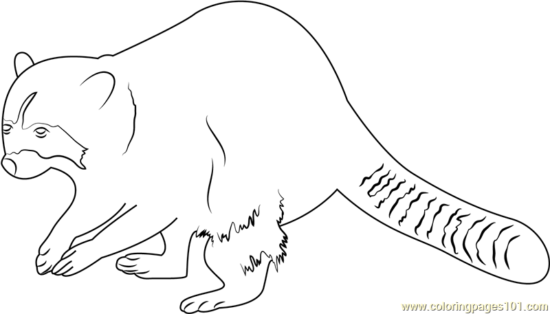 Raccoon Body Coloring Page