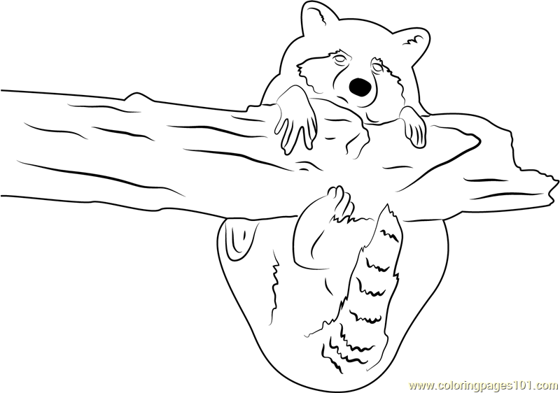 Raccoon Hug a Tree Coloring Page