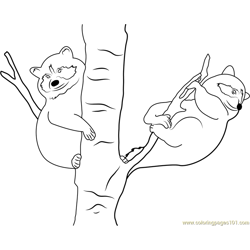 Raccoon Babies on Tree Free Coloring Page for Kids