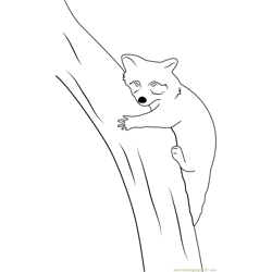 Raccoon Relaxing on Tree Free Coloring Page for Kids