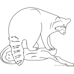 Raccoon Seet coloring page