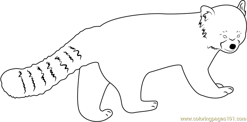 Cute red panda coloring page