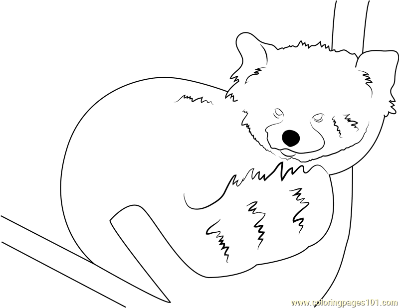 Graceful Red Panda Coloring Page Free Red Panda Coloring