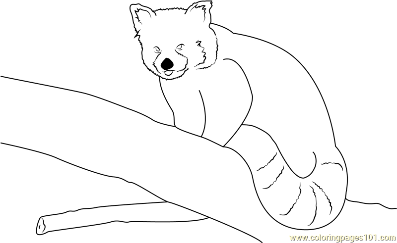 red panda by neomys coloring page