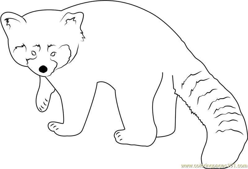 Red Panda Looking Toward Me Coloring Page