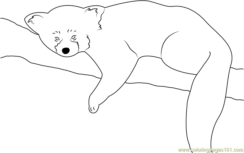 Red Panda Sleeping Coloring Page