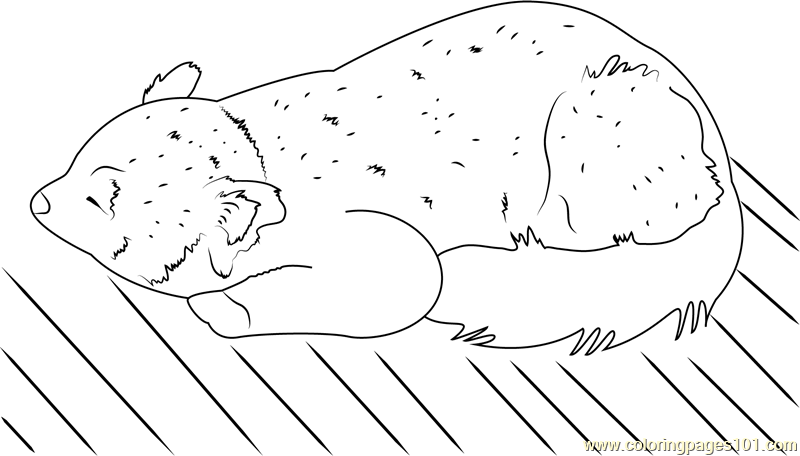 Red Panda Adult Coloring Pages