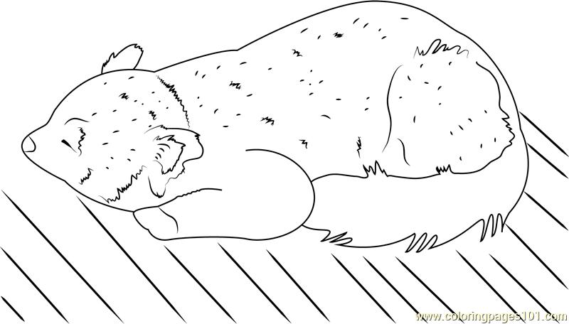 red panda coloring pages - red panda coloring page free red panda coloring pages