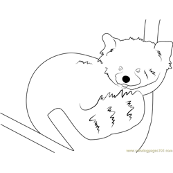 Graceful Red Panda Free Coloring Page for Kids