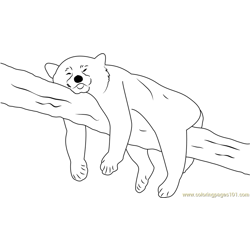 Panda Sleeping On Tree Free Coloring Page for Kids
