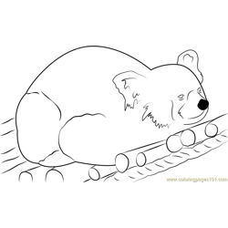 Red Bear-cat Free Coloring Page for Kids