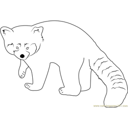 Red Panda Looking Toward Me Free Coloring Page for Kids