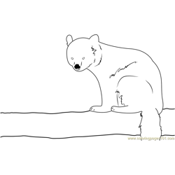Red Panda Sitting Free Coloring Page for Kids