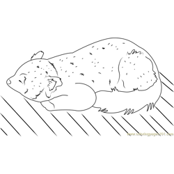 Red Panda Free Coloring Page for Kids