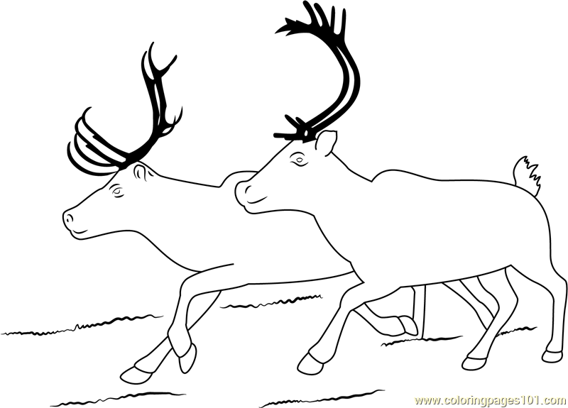 Two Reindeer Coloring Page